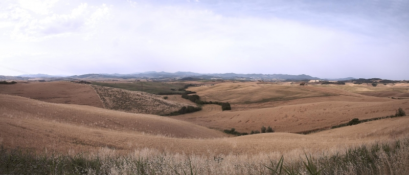 panoramica grano